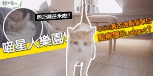 【貓奴之家】$62萬裝修蔚藍灣畔! 點樣配合喵星人要求? (附影片)