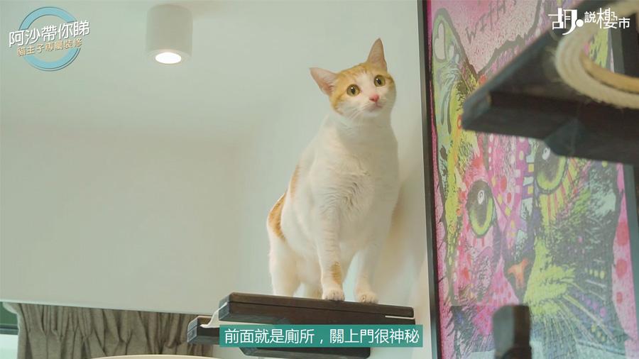 有貓貓吊橋、高台、布架,可想而知貓貓在家裡的地位很崇高。